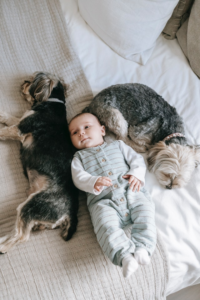 baby with pets